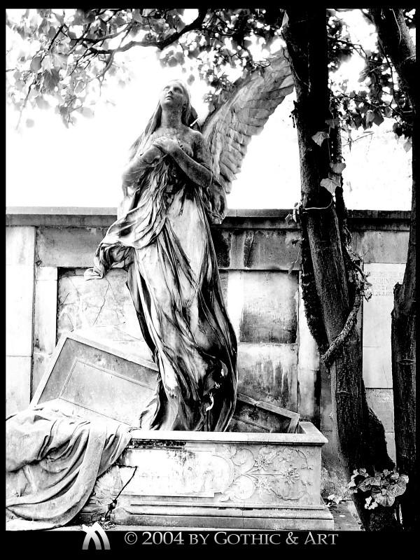 2005_01_26_Pragfriedhof_19.jpg